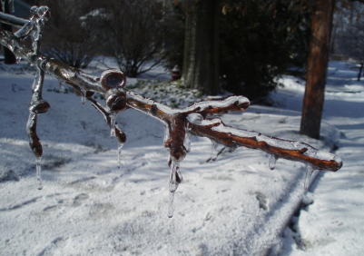 ice_storm_oak_branch.jpg