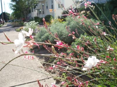pink_plant1.jpg