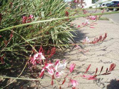 pink_plant2.jpg