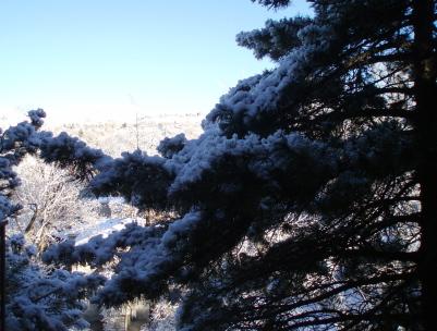 snow_day1.jpg